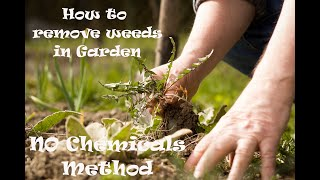 how to get rid of weeds in Garden, flower beds, with no chemicals