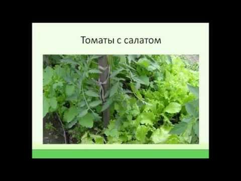 Как защитить растения от вредителей, болезней и заморозков