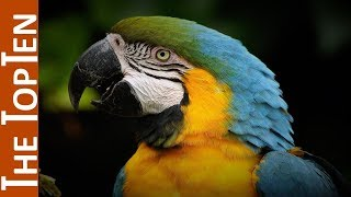 The Top Ten Beautiful Parrots in the World