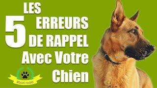 Les 5 ERREURS DU RAPPEL AVEC VOTRE CHIEN !!!!!