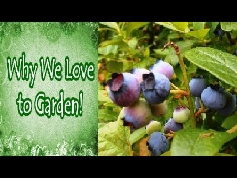 Why We Love to Garden (Tagged Collaboration)