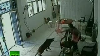 CCTV: Chinese woman beats back wild boar