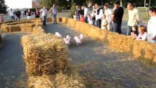 Course de cochons n°3 (2009)