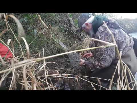 mink-trapping-tips,-using-cage-traps.