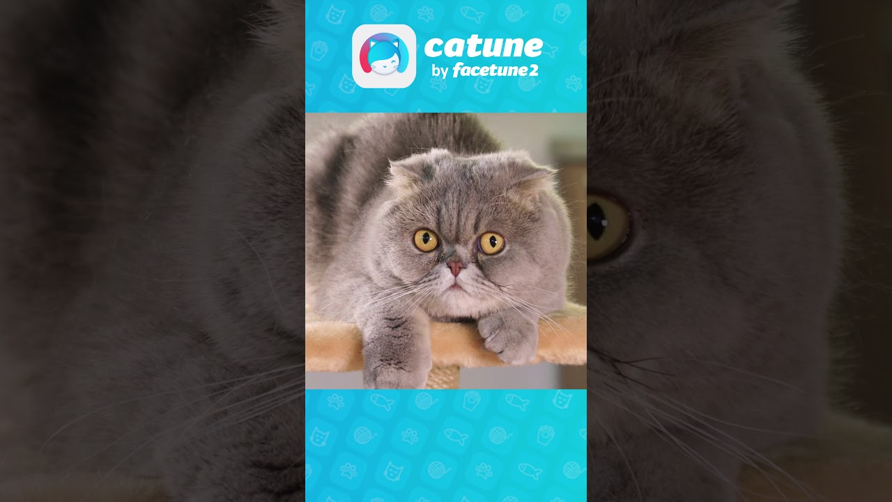 نتيجة بحث الصور عن Catune