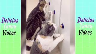 Delicious 💓 2019 New Compilation 💓 Funny animals Videos