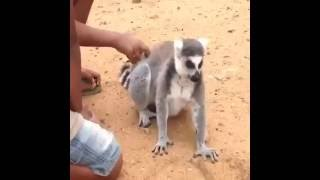 Komik Hayvanlar - Bura buraa xD