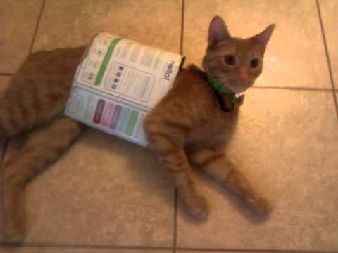 Curious Cat Gets The Cardboard Box, Scares Us All Silly