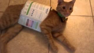 My crazy cat Max..