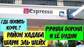 Итальянское кафе Хадаба Шарм эль Шейх наша домашняя ворона и ее будни