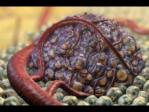 Рак и ВИЧ отступают? Новости на QWERTY