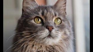 Спасая беременную кошку, люди не знали, что один из её котят спасёт человеческую жизнь!
