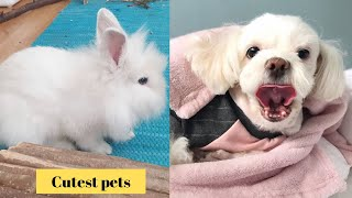 Cutest Pets in The world 🌎 | Supper funniest pets | Animal Planet Ever #16