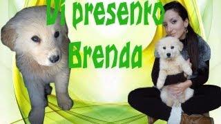 Vlog + Vi presento Brenda! :D