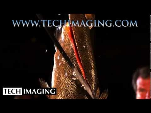 High Speed Camera Video - Katana cutting a fish