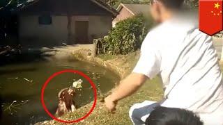 中国江西省の南昌動物園で10月3日、男性観光客が園内のカバにビニール袋...