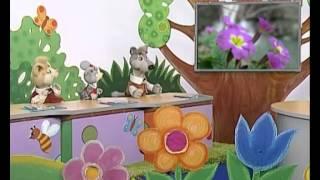 Природоведение 73. Первоцветы — Шишкина школа