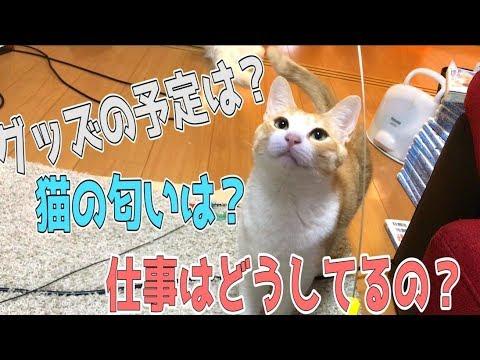 猫たちと魂の質問返しコーナー!!!!