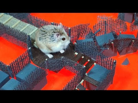 MAJOR HAMSTER in BLUE DIAMOND TEMPLE with LAVA