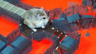 HAMSTER in BLUE DIAMOND TEMPLE with LAVA