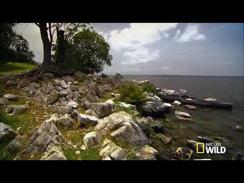 Impact Of Nile Perch In Lake Victoria