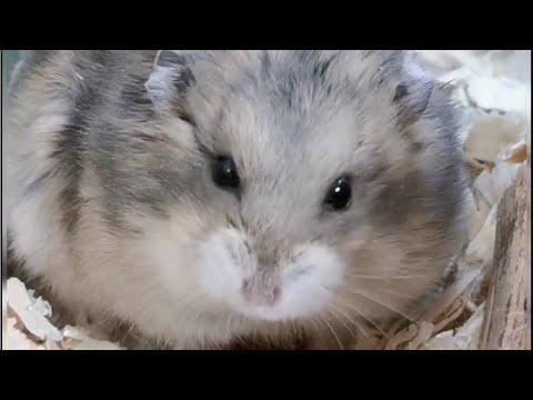 Alberta Canada Petland Pets