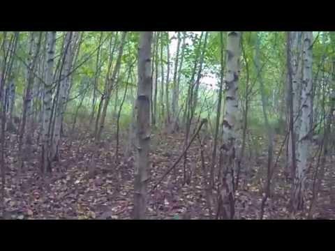 Что нужно делать, чтобы не заблудиться в лесу