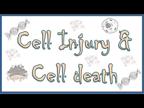 Cell Injury and Cell Death. Causes, mechanism and different types of cell injury - part I