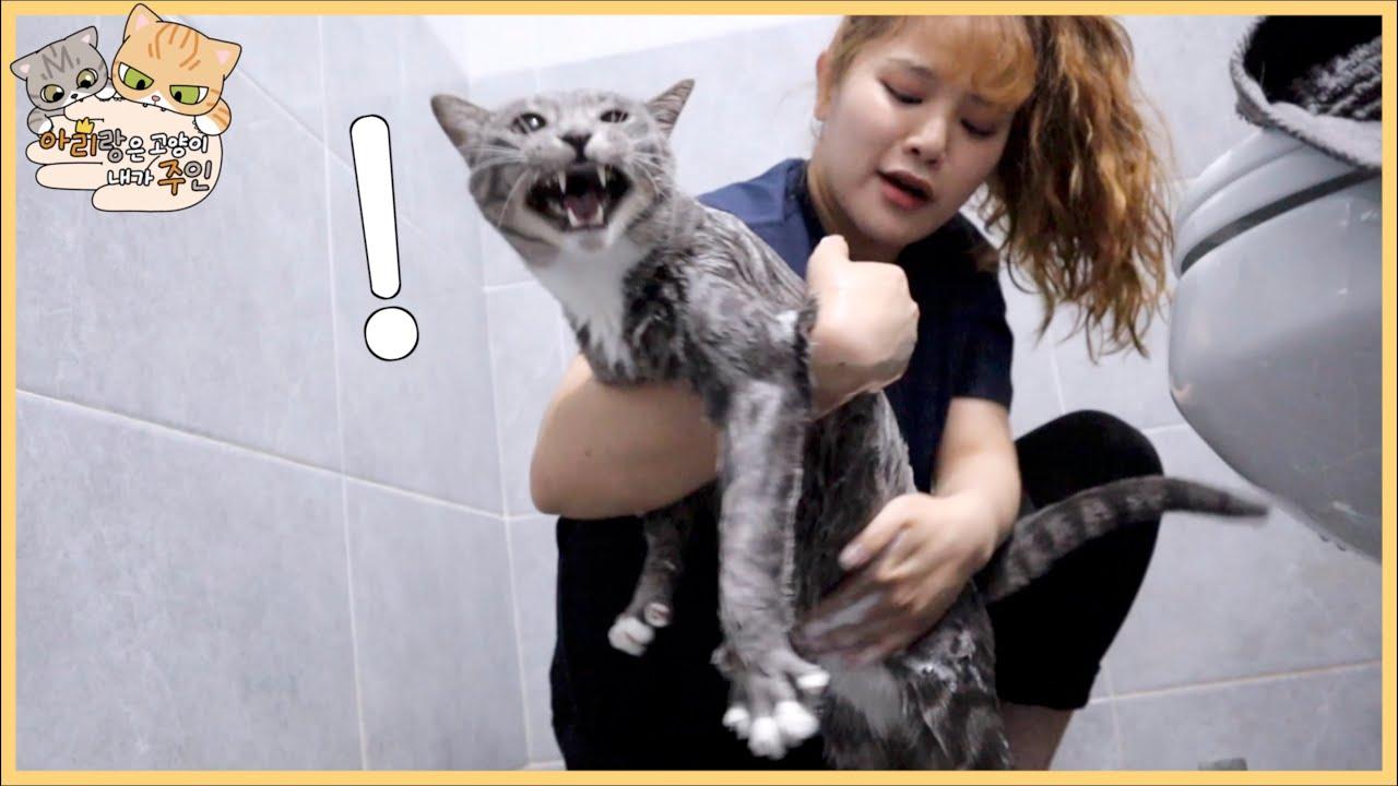 얘가 리랑이도 목욕 시켰습니다.
