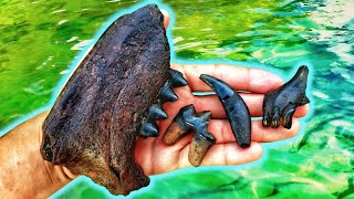 We Found AMAZING Dire Wolf Teeth Underwater in the River!! | Fossil Hunting