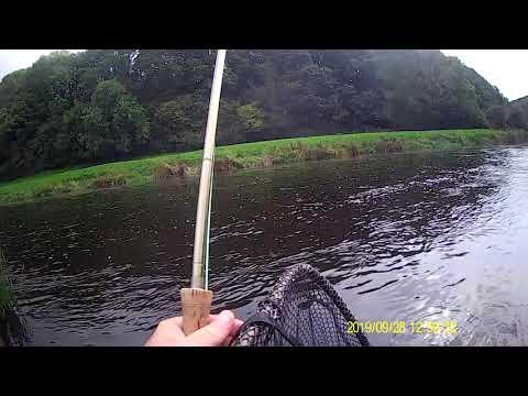 River Nore Cock Salmon