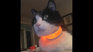 Cat collar GPS tracking options