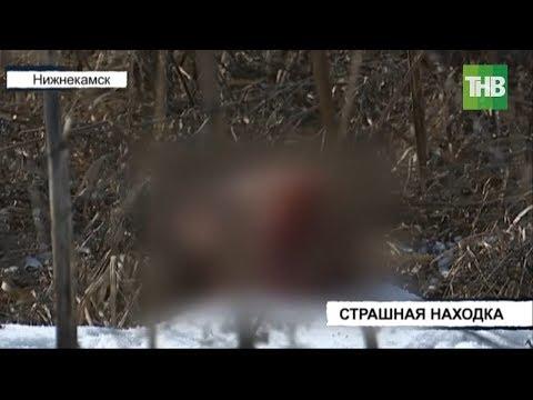 Отрезанную человеческую голову обнаружили в лесопосадке Нижнекамска   ТНВ