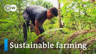 Peru: Sustainable farming in the rainforest | Global Ideas