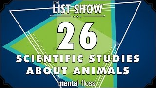 26 Scientific Studies about Animals  - mental...
