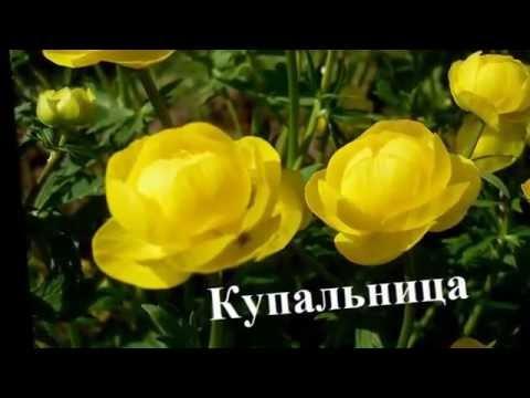 РОЗЫ ДЛЯ ТЕБЯ! Подарок - Самые красивые цветы