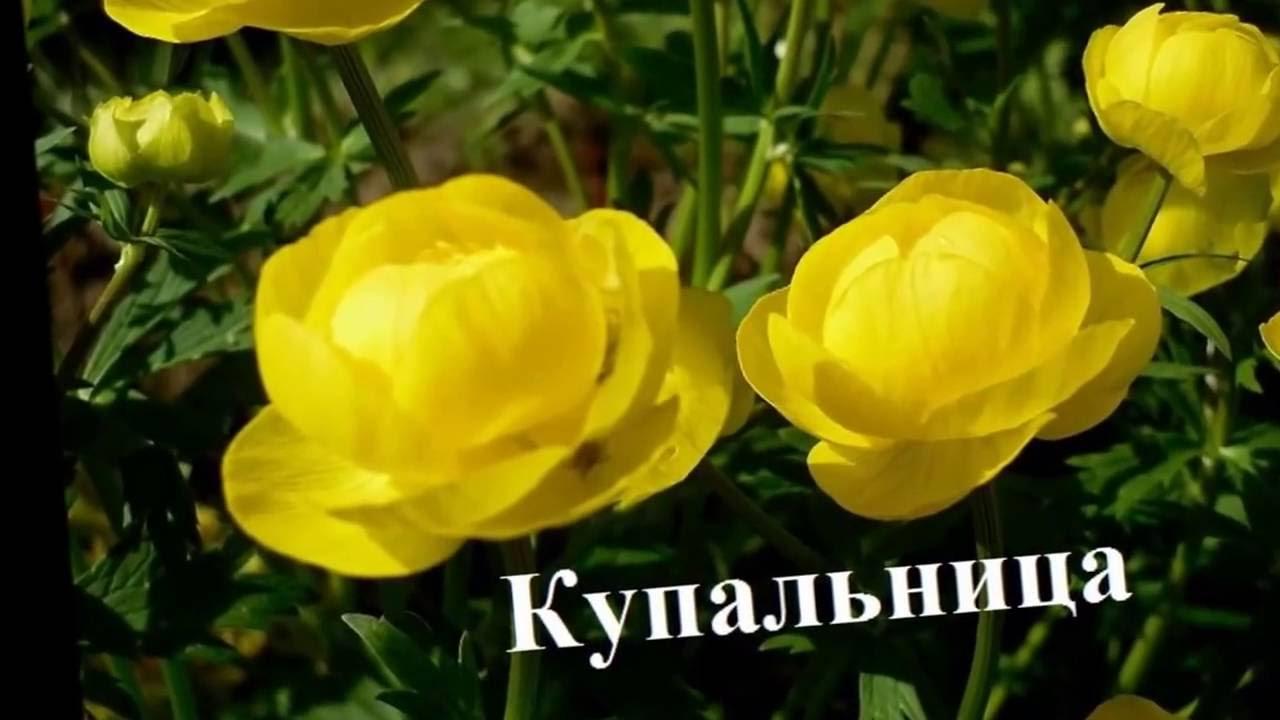 Самые неприхотливые цветы для сада Фото+название - YouTube