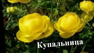 видео Растения для клумбы: цветы с названиями и фото
