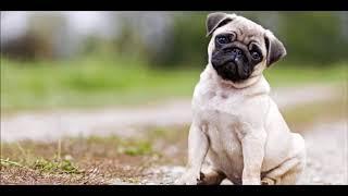Пропала собака (English version)