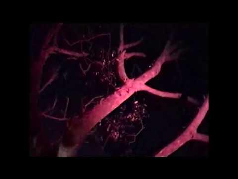 DEB NEVER - IN THE NIGHT
