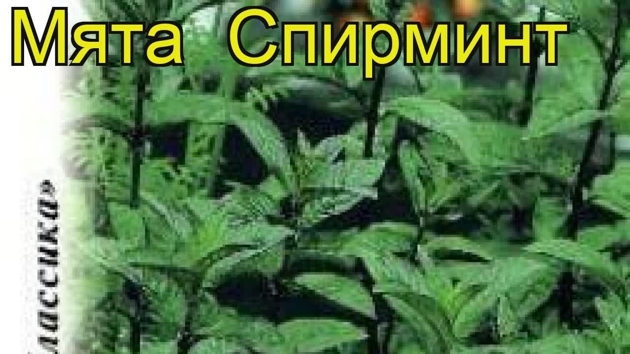 Семена цветов семена овощей агрохимия луковицы и клубни (0) многолетники (0) флоксы (0) астильбы (0) лилейники (0) ирисы (0) хосты (0) пионы.