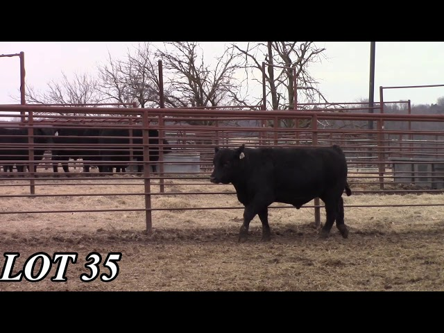 Mead Angus Farms Lot 35