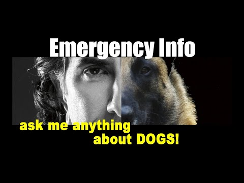Keep Your Pets Safe for Evacuation - ask me anything - Pet Safety