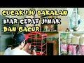 Cara Menjinakan Cucak Ijo Bahan Bakalan Dan Cepat Gacor  Mp3 - Mp4 Download