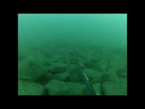 Spearfish North Pier Durban