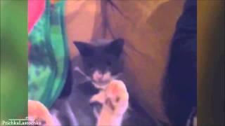 Cat's wanking