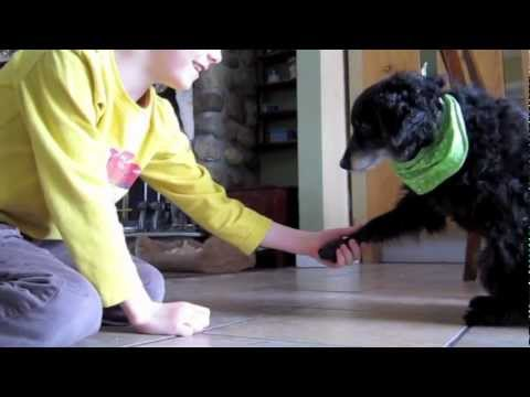 CUTEST dog trick video with rescue dog and kid [Chico the rescue dog]