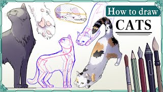 How to draw CATS - Mink