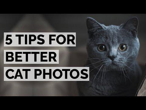 Cat photography basics