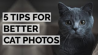 CAT PHOTOGRAPHY 101